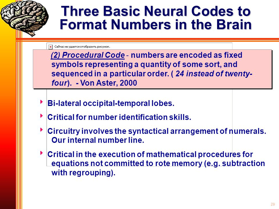 Three Basic Neural Codes to Format Numbers in the Brain
