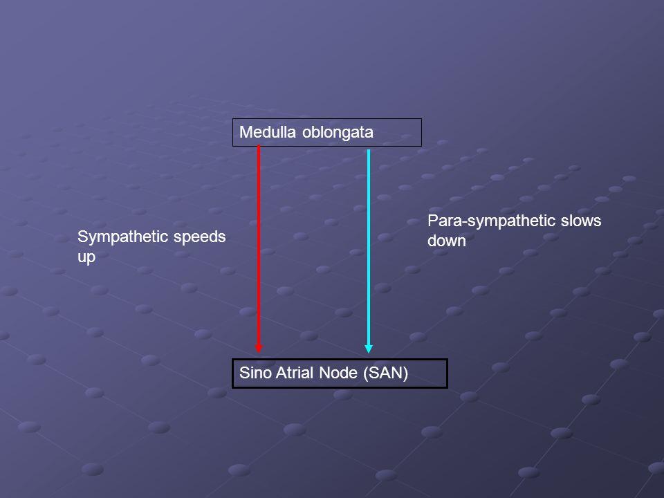 Medulla oblongata Para-sympathetic slows down Sympathetic speeds up Sino Atrial Node (SAN)