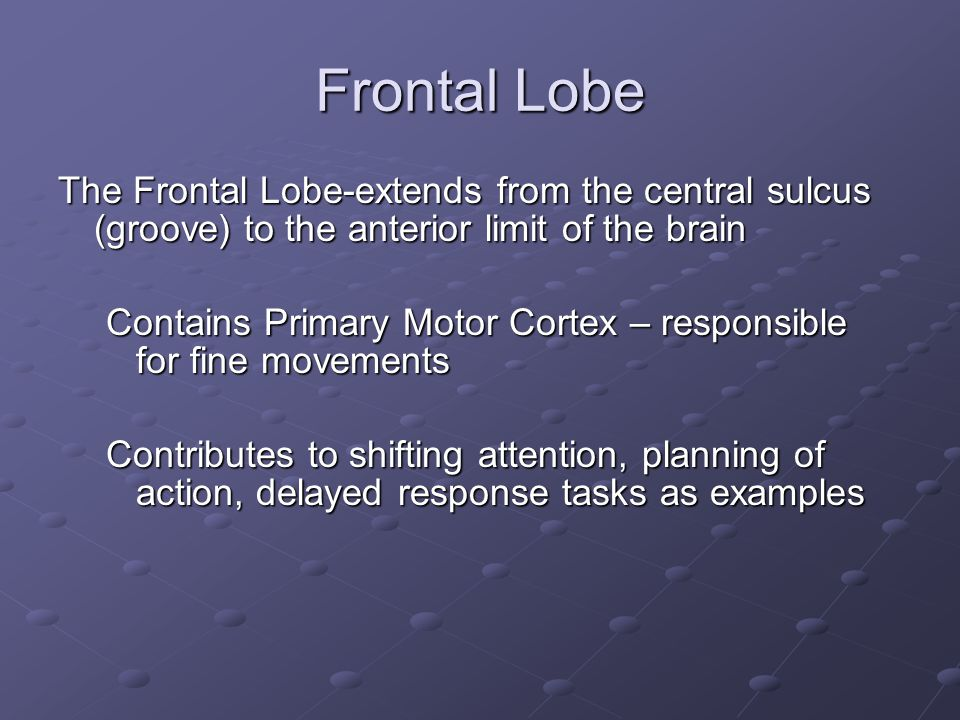 Frontal Lobe The Frontal Lobe-extends from the central sulcus (groove) to the anterior limit of the brain.