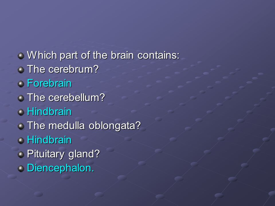 Which part of the brain contains: