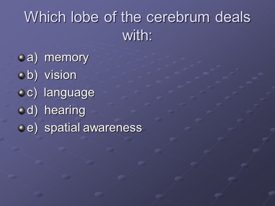 Which lobe of the cerebrum deals with: