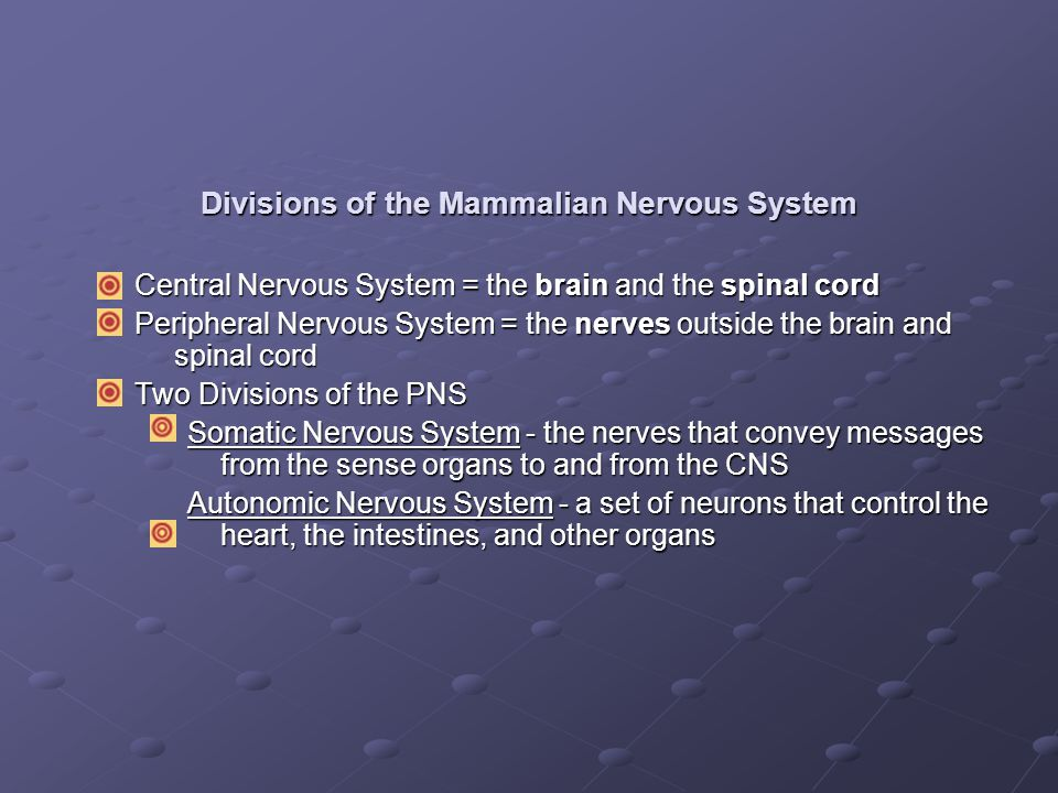 Divisions of the Mammalian Nervous System
