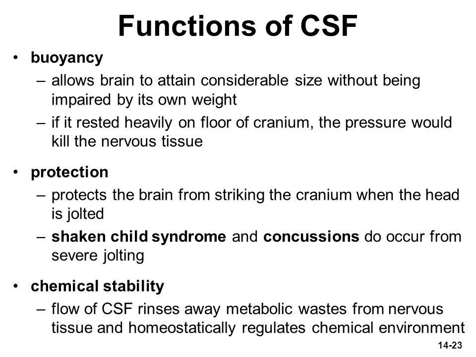 Functions of CSF buoyancy
