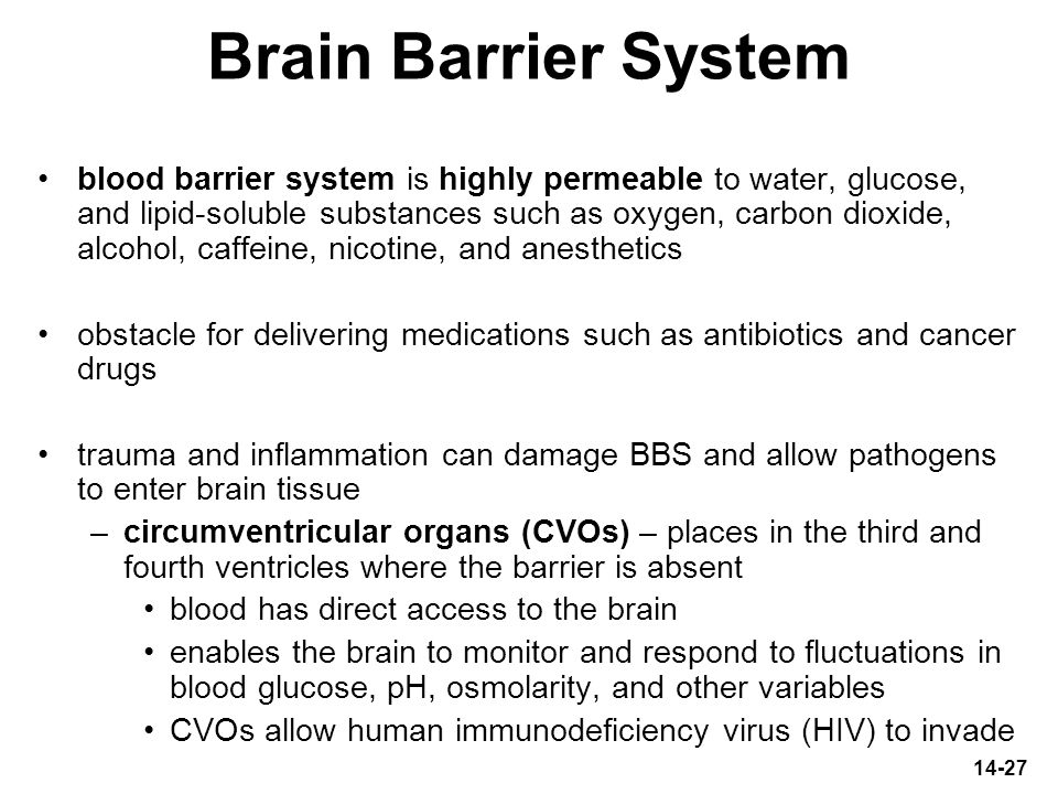 Brain Barrier System