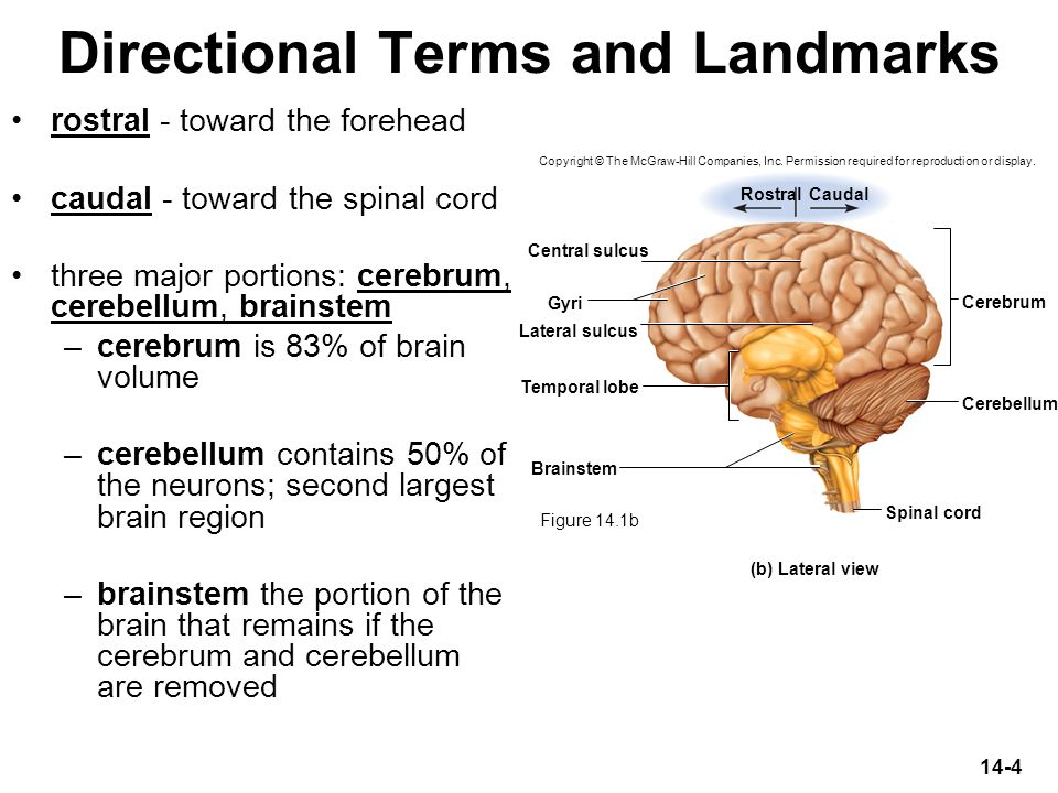 Directional Terms and Landmarks