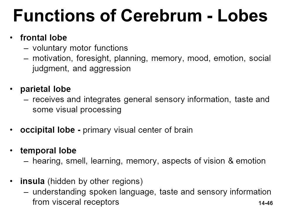Functions of Cerebrum - Lobes