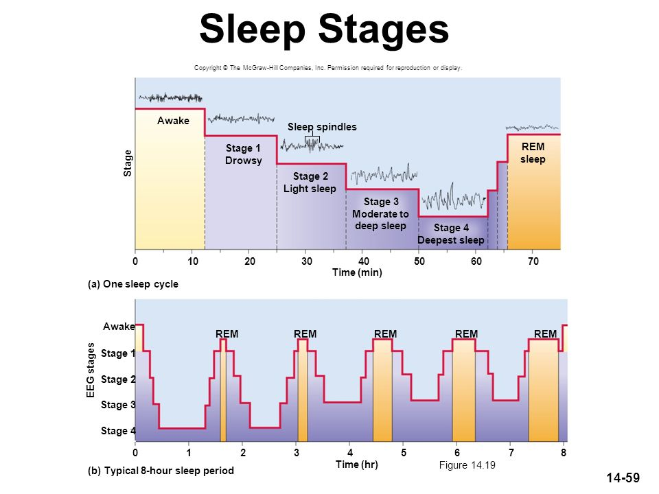 Sleep Stages Awake Sleep spindles Stage 1 Drowsy REM sleep Stage