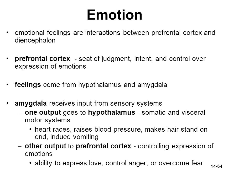 Emotion emotional feelings are interactions between prefrontal cortex and diencephalon.