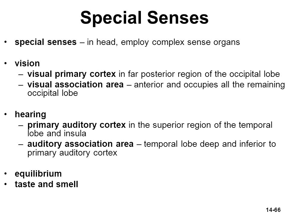 Special Senses special senses – in head, employ complex sense organs