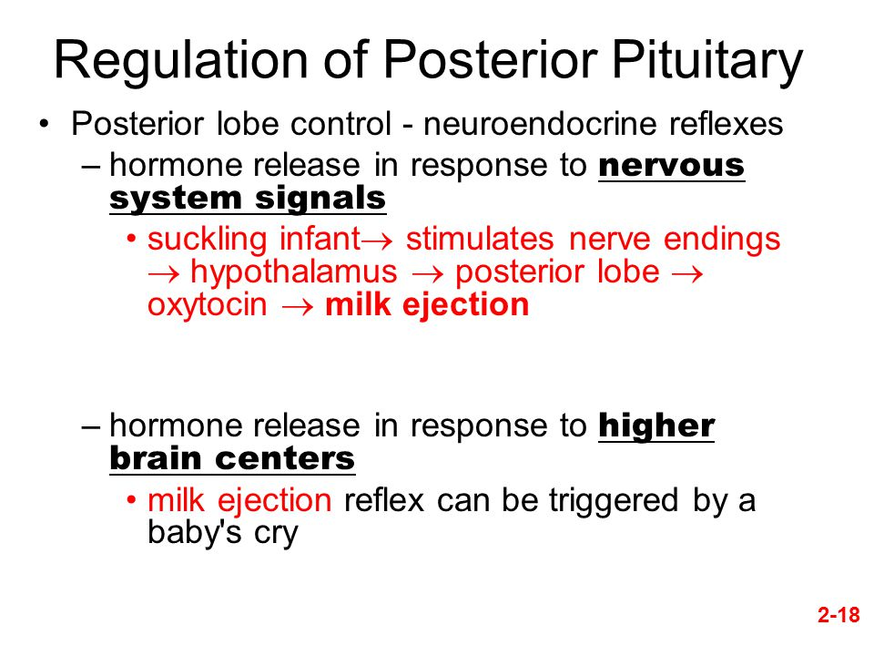 Regulation of Posterior Pituitary