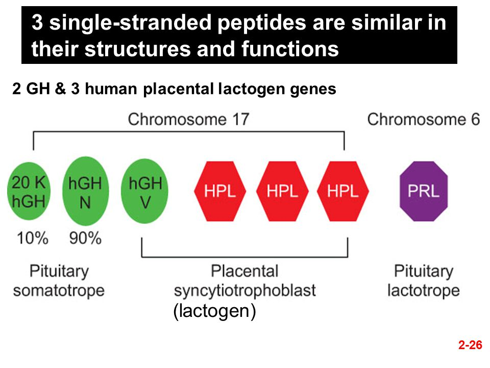 3 single-stranded peptides are similar in their structures and functions