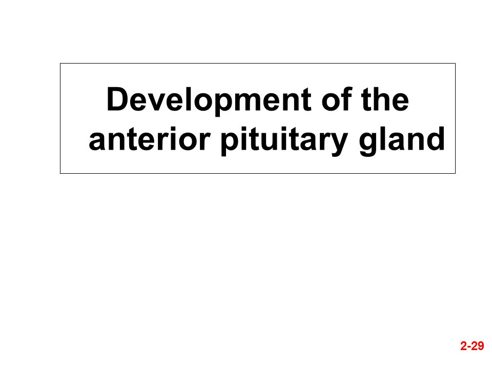 Development of the anterior pituitary gland