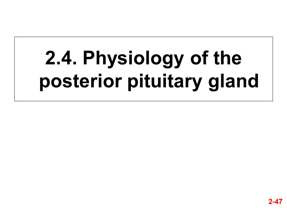 2.4. Physiology of the posterior pituitary gland