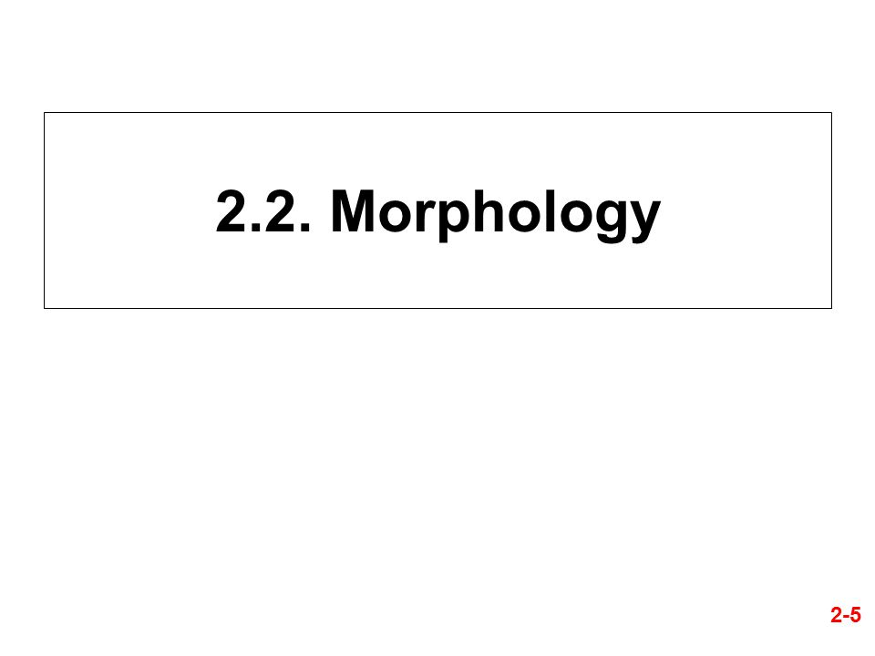 2.2. Morphology