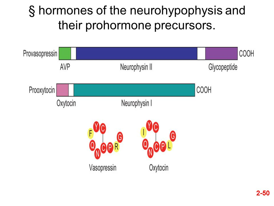§ hormones of the neurohypophysis and their prohormone precursors.
