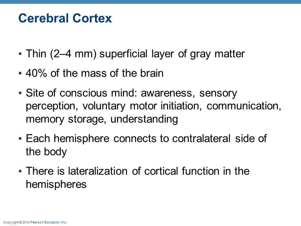 Cerebral Cortex Thin (2–4 mm) superficial layer of gray matter
