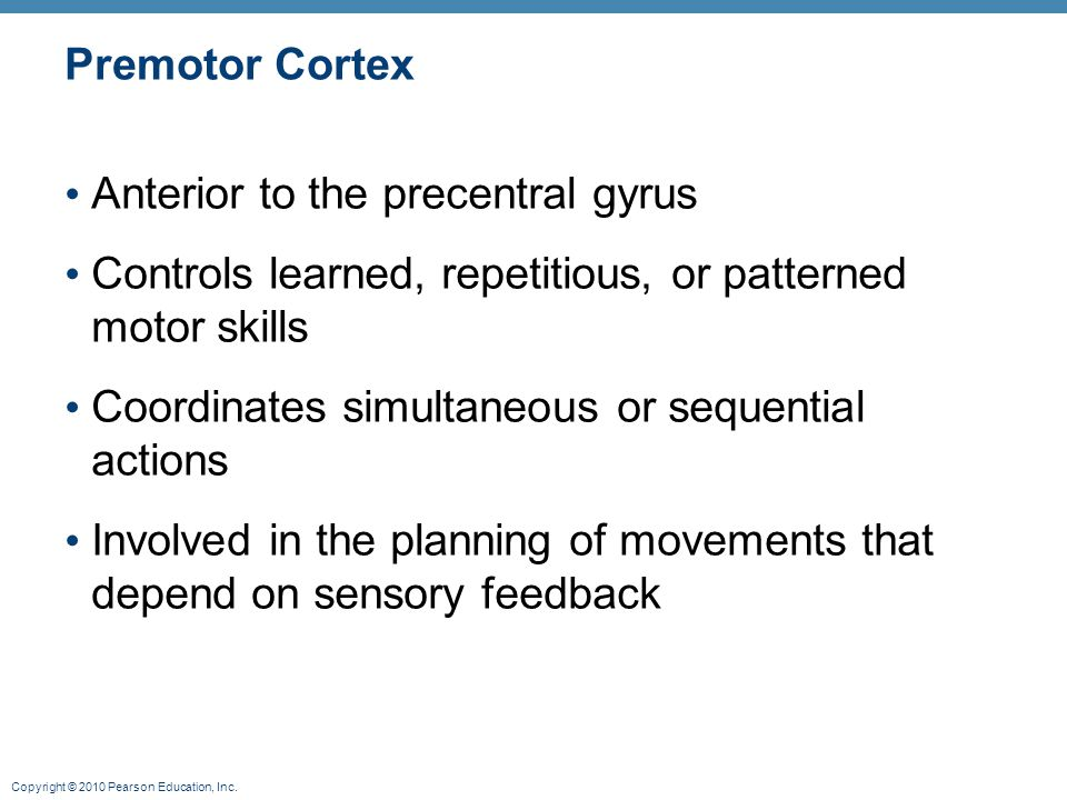 Premotor Cortex Anterior to the precentral gyrus. Controls learned, repetitious, or patterned motor skills.