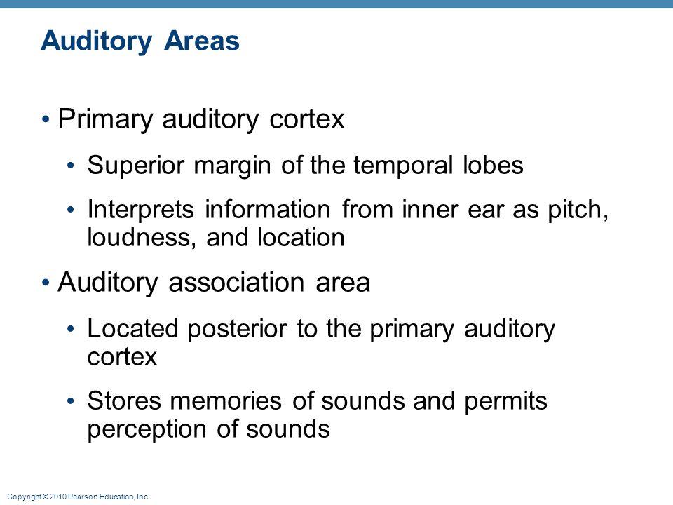 Primary auditory cortex