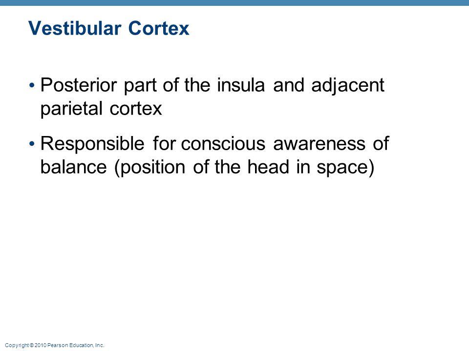 Vestibular Cortex Posterior part of the insula and adjacent parietal cortex.