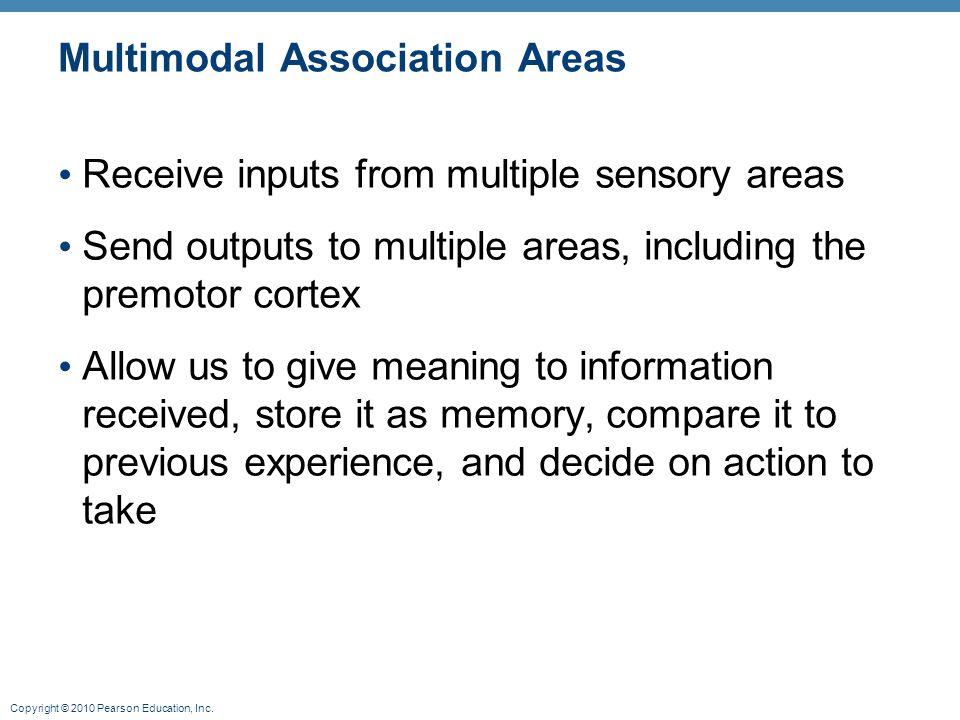 Multimodal Association Areas