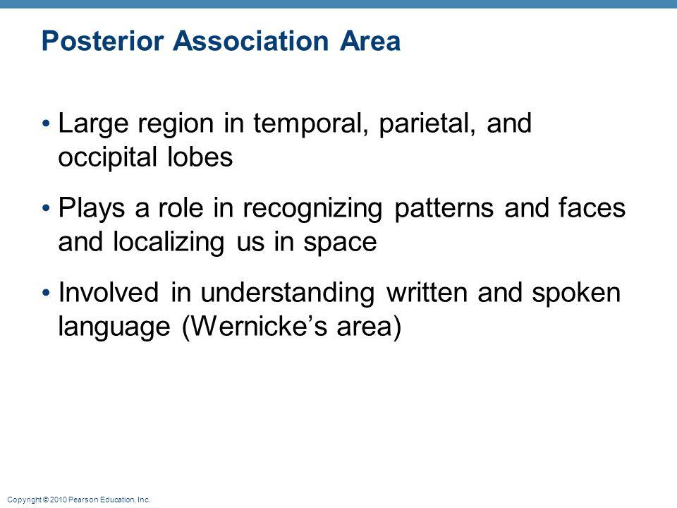 Posterior Association Area