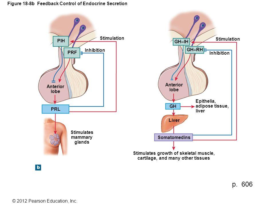Figure 18-8b Feedback Control of Endocrine Secretion