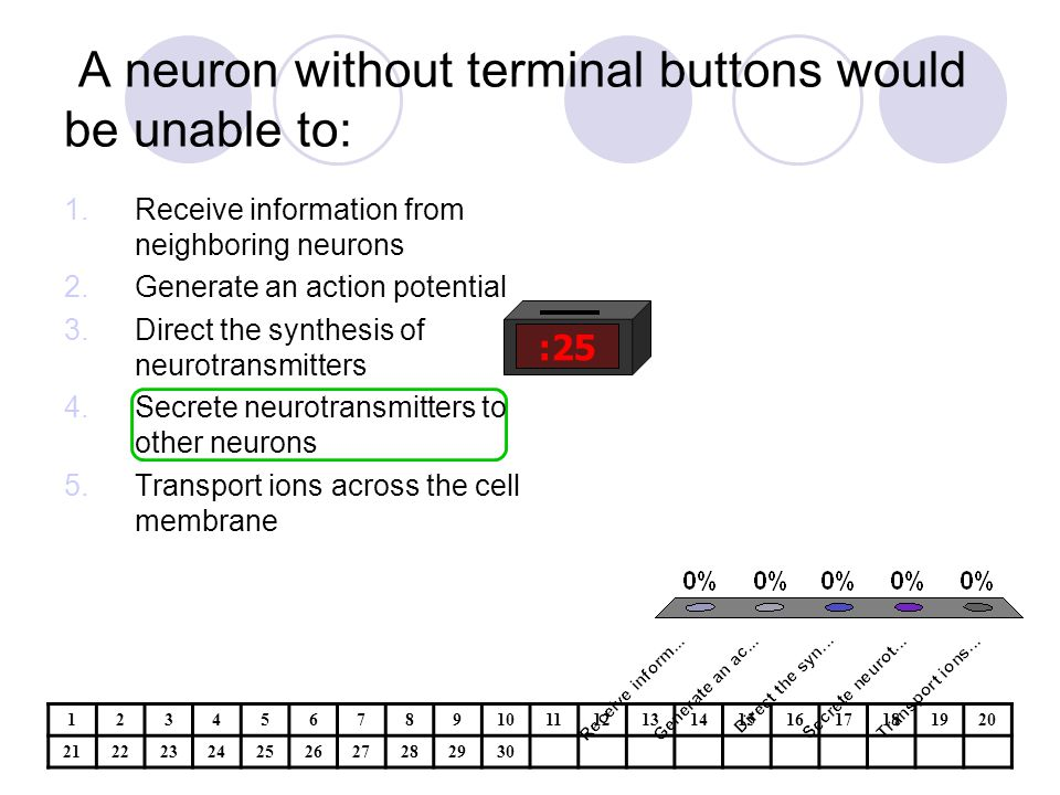 A neuron without terminal buttons would be unable to: