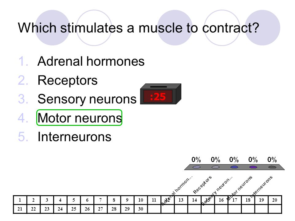 Which stimulates a muscle to contract