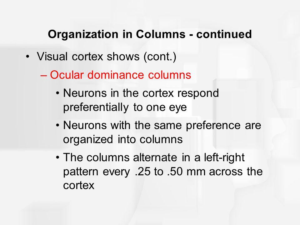 Organization in Columns - continued