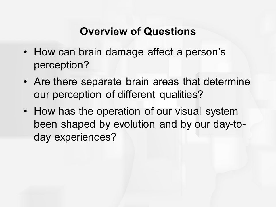 Overview of Questions How can brain damage affect a person's perception