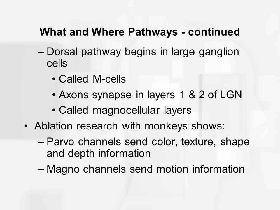 What and Where Pathways - continued