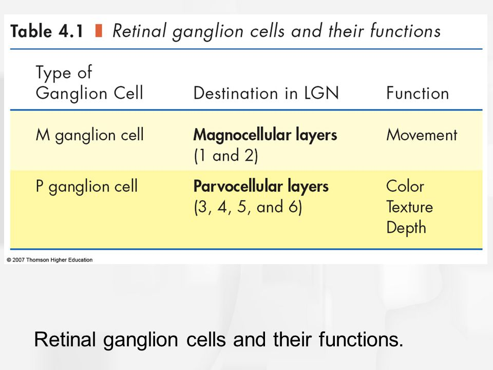 Retinal ganglion cells and their functions.