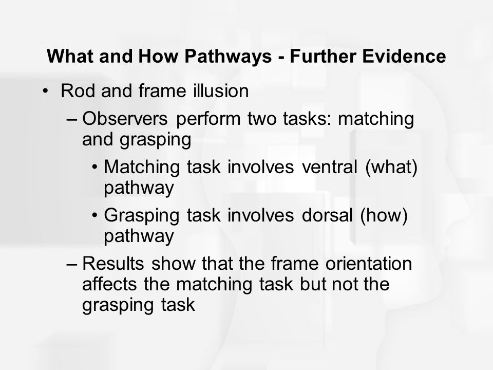 What and How Pathways - Further Evidence