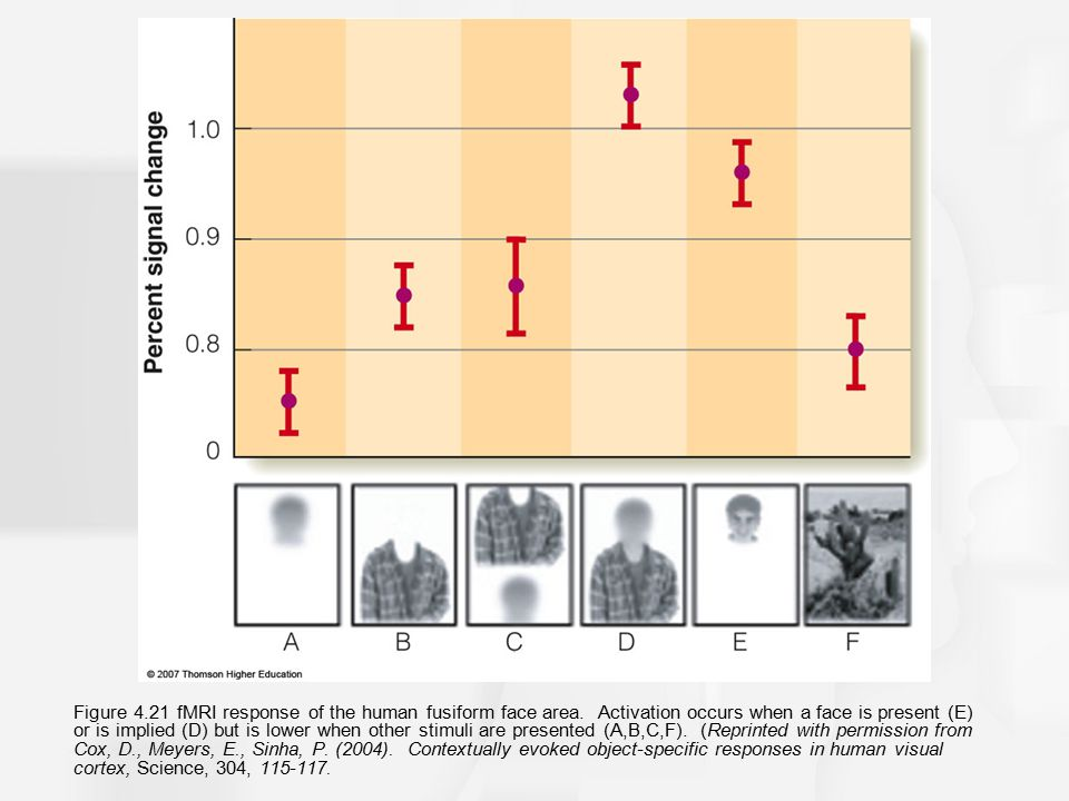 Figure 4. 21 fMRI response of the human fusiform face area
