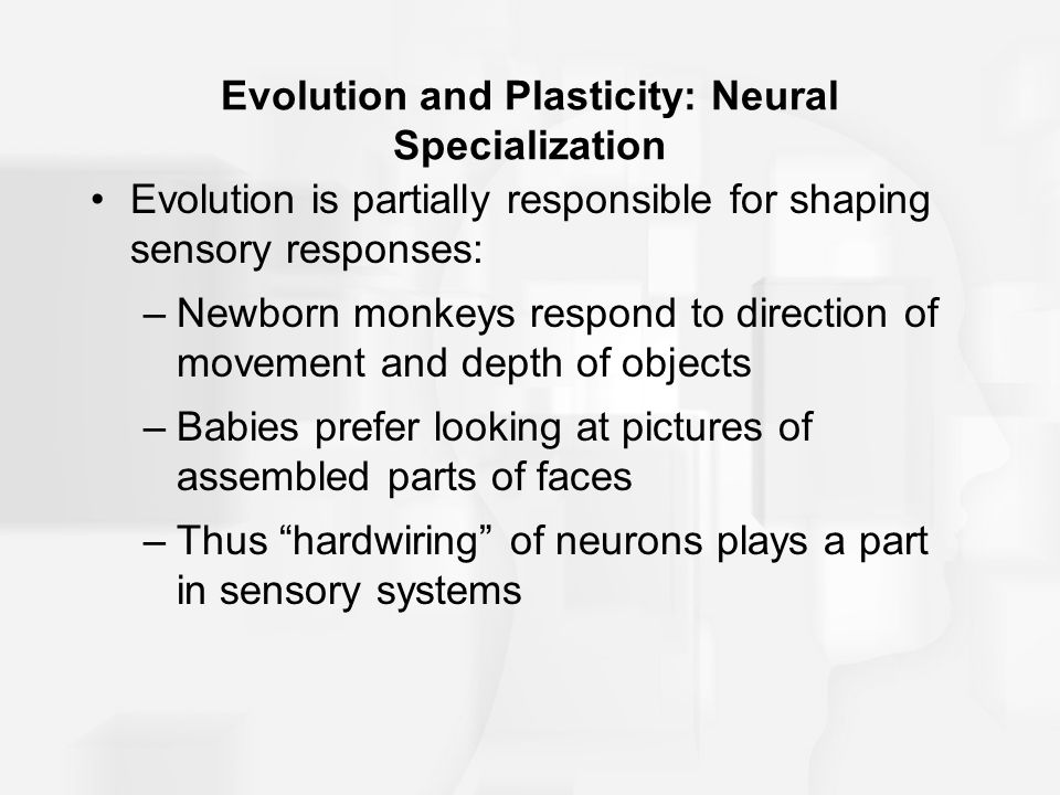 Evolution and Plasticity: Neural Specialization
