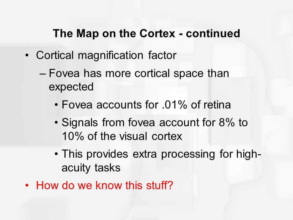 The Map on the Cortex - continued