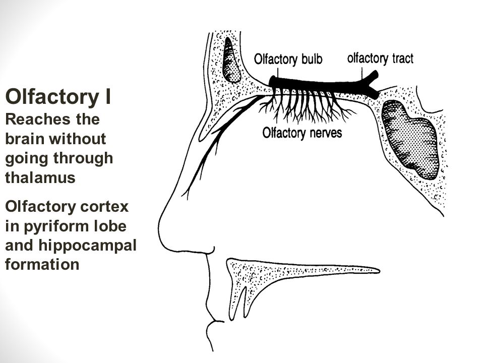 Olfactory I Reaches the brain without going through thalamus