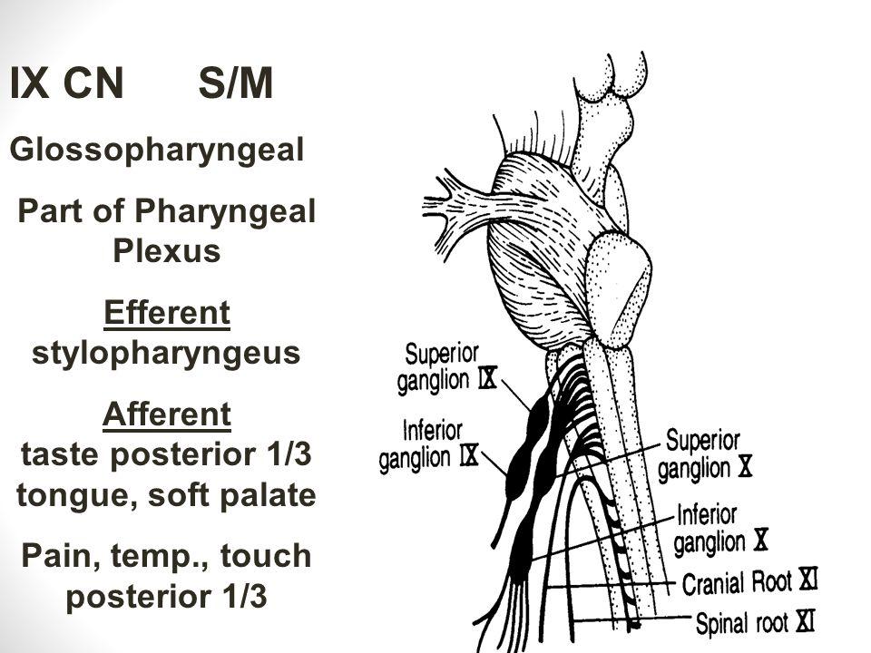 IX CN S/M Glossopharyngeal Part of Pharyngeal Plexus