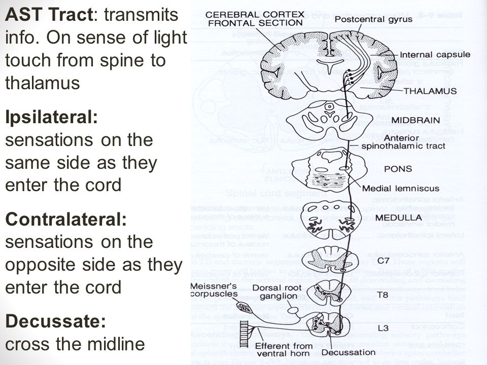 AST Tract: transmits info