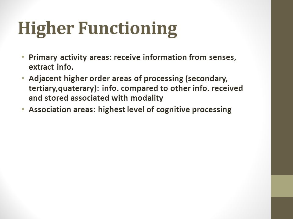 Higher Functioning Primary activity areas: receive information from senses, extract info.