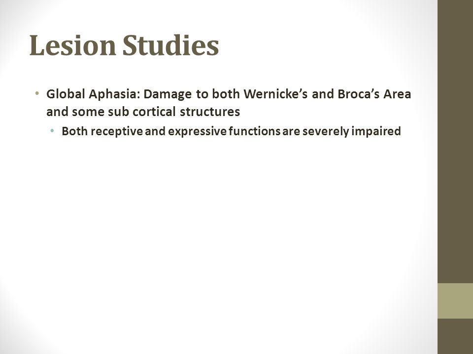 Lesion Studies Global Aphasia: Damage to both Wernicke's and Broca's Area and some sub cortical structures.