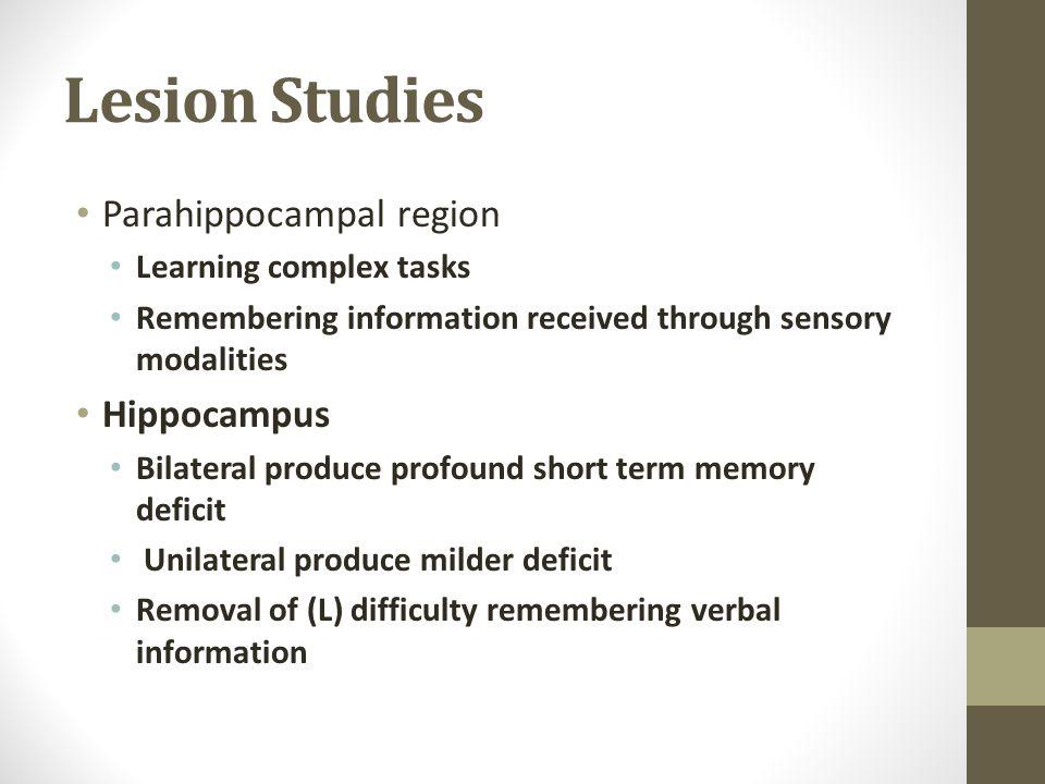 Lesion Studies Parahippocampal region Hippocampus