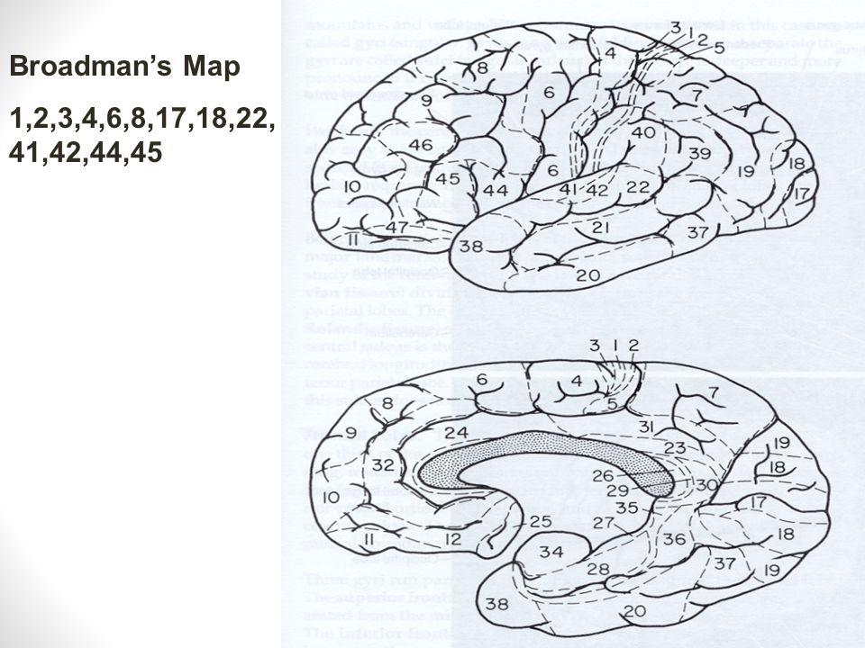Broadman's Map 1,2,3,4,6,8,17,18,22, 41,42,44,45
