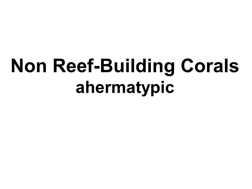 Non Reef-Building Corals