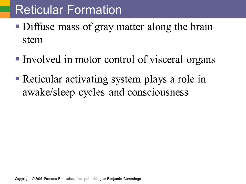 Reticular Formation Diffuse mass of gray matter along the brain stem