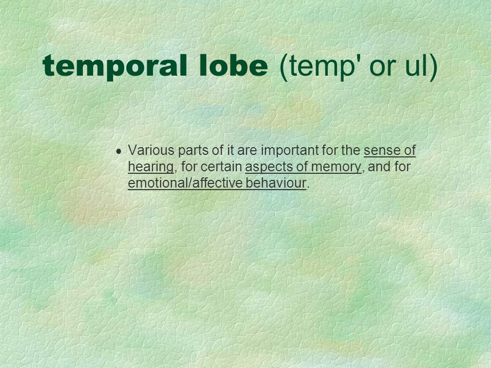 temporal lobe (temp or ul)
