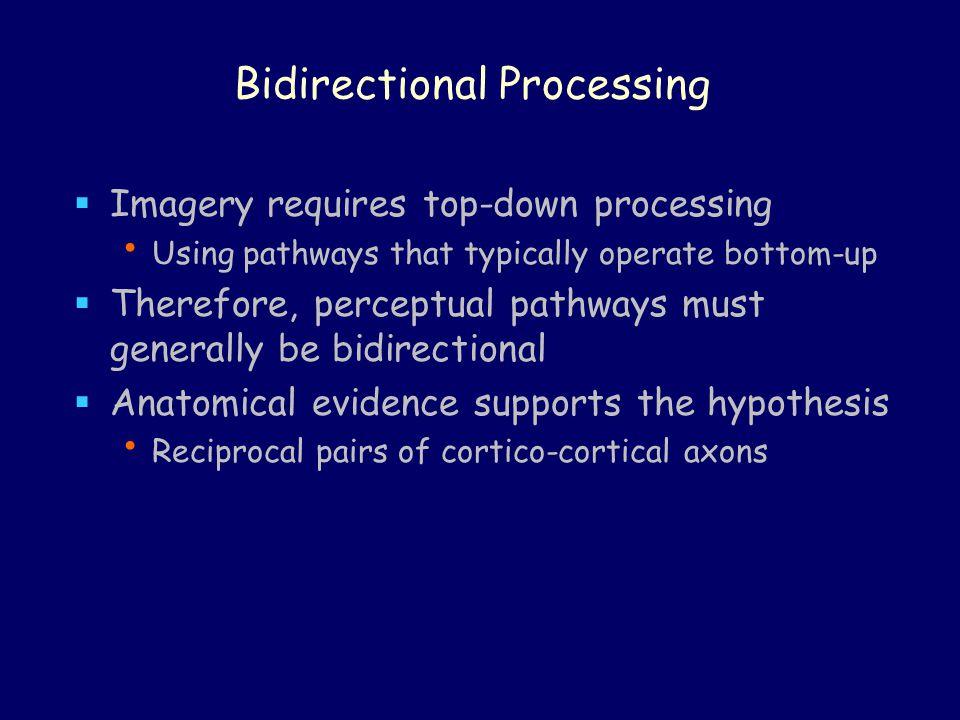 Bidirectional Processing
