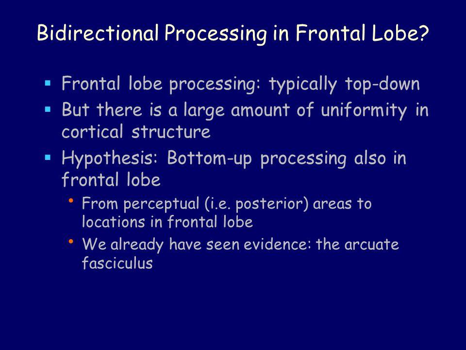 Bidirectional Processing in Frontal Lobe