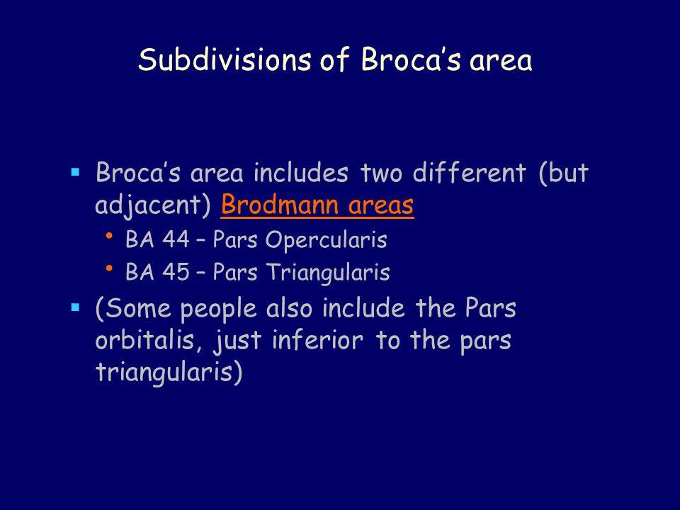 Subdivisions of Broca's area