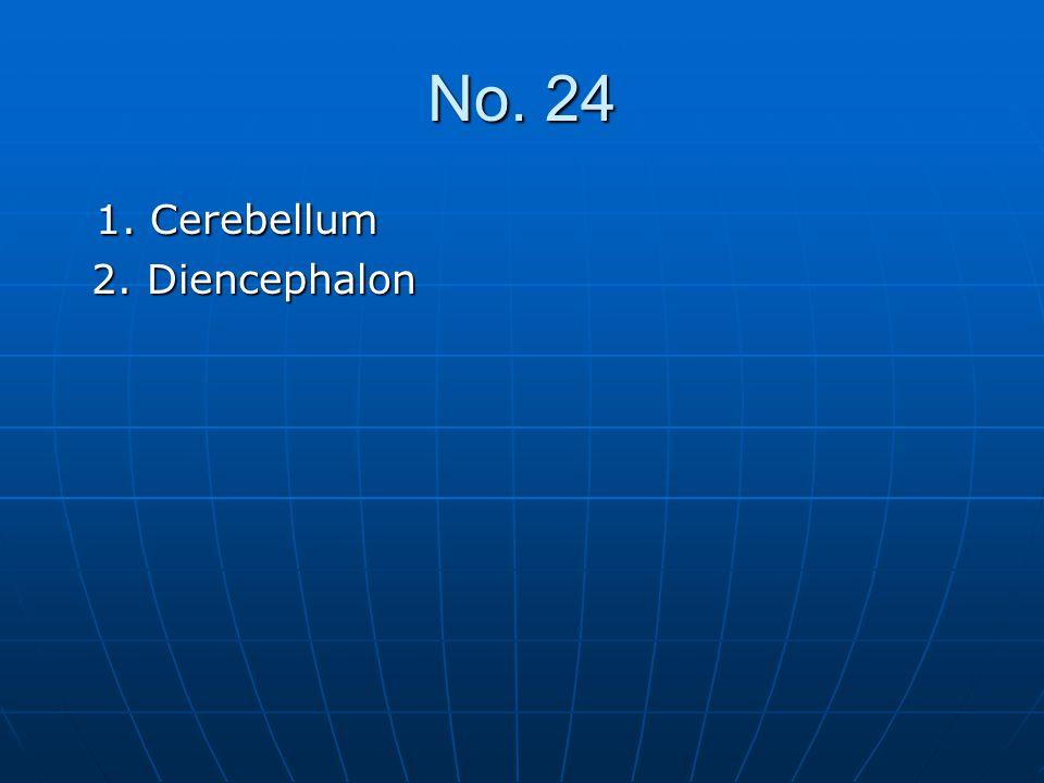 No. 24 1. Cerebellum 2. Diencephalon